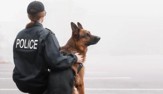 警察官の年収は高いのか? 大卒・高卒ごとの給料や年代別の昇給を徹底解説